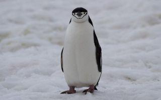 Как вывести сайт из-под Penguin