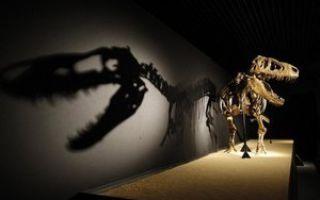 Газы динозавров могли изменить климат